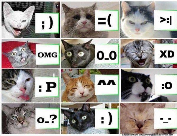 Exposition de minoux meow meow 1g1k9ci4